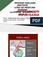HIPOFISIS HIPOTALAMO2