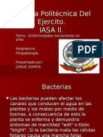 bacterias fito.ppt