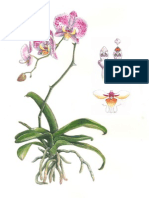 orchid dissection.pdf