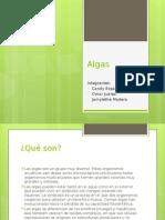 Presentacion Algas (1)
