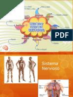 Sistema Nervioso Introducción
