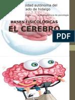 El Cerebro Envío