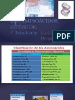 Aminocidos clasificacion y descripcion