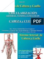 vascularizacion