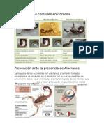 Prevencion y Alacranes Mas Comunes en Cordoba