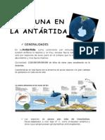 Fauna Antartico