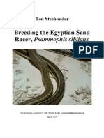 Steehouder2015-Breeding the Egyptian Sand Racer, Psammophis Sibilans