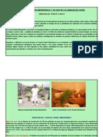 El Forraje Verde Hidropónico y Su Uso en La Crianza de Cuyes en Acari