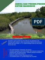 Dinamika Dan Proses Ekosistem Mangrove