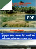 Dinamika Dan Proses Ekosistem Estuari