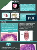Organos Linfaticos