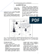 Nervni sistem.pdf