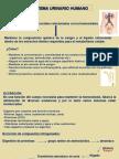 Presentación SISTEMA URINARIO.ppt