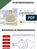 Exposicion de Neurotransmisores