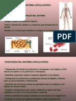 Presentación Circulatorio CNBA
