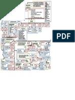 approach to haemolytic anaemia algorithm