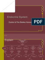 endocrine system feedback systems