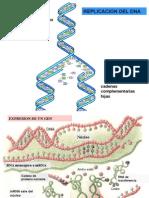 clasegenoma-proteinas