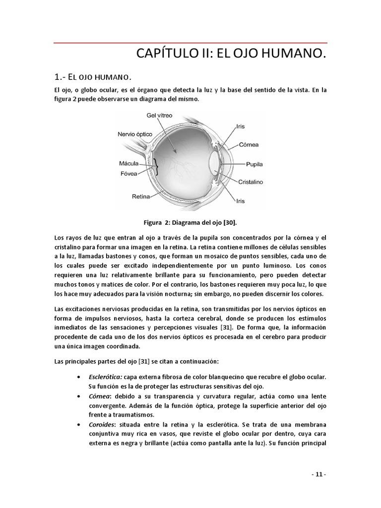 Excepcional Diagrama De Ojo Marcado Galería - Imágenes de Anatomía ...
