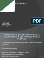 Importancia del nitrógeno en el crecimiento y desarrollo.pptx