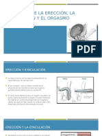Fisiologia Ereccion