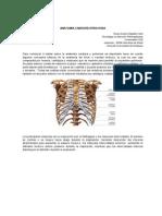 Anatomia Cardio Respirator i A