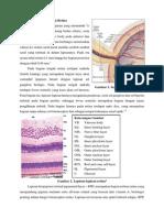 Anatomi Dan Histologi Retina