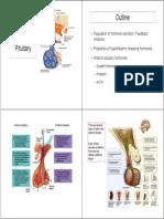 19 Anterior Pituitary-4pp (2)