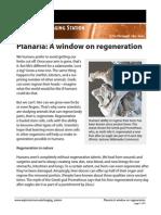 Planaria Information