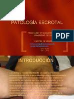 Tema 8 Patología Escrotal.ppt