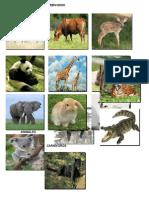 ANIMALES HERBÍVOROS.docx