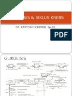 Bmd - Glikolisis & Siklus Krebs