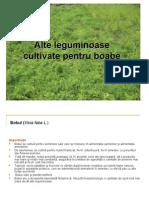 Leguminoase cultivate pentru boabe.ppt