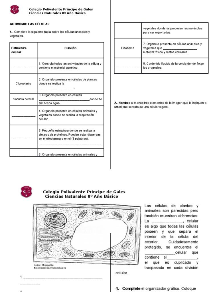 Guìa Para Imprimir C Naturales Docx