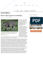 How do a zebra's stripes act as camouflage.pdf