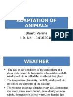 Adaptation of Animals