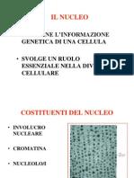 Nucleo e Genoma