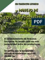 Brassicas Forrajeras