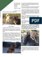 Revista Canina Página 17