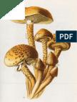 Champignon-9.pdf