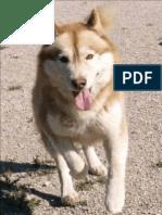 Revista Canina Página 31