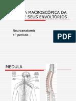 Anatomia Macroscopica Da Medula e Seus Envoltorios