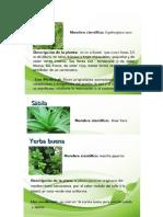 planta medicinales.docx