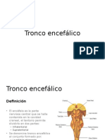 Anatomia- tronco encefalico