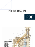 plexul brahial