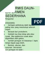 EPIDERMIS DAUN.docx
