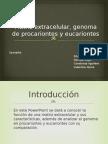 Matriz Extracelular, Genoma de Procariontes y Eucariontes