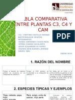 Tabla Comparativa Sobre Tipos de Fotosíntesis