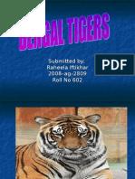 602.Bengal Tigers