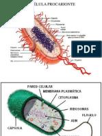 Presentacion celula